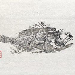 Gyotaku galla